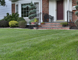 Weekly Lawn Care Services